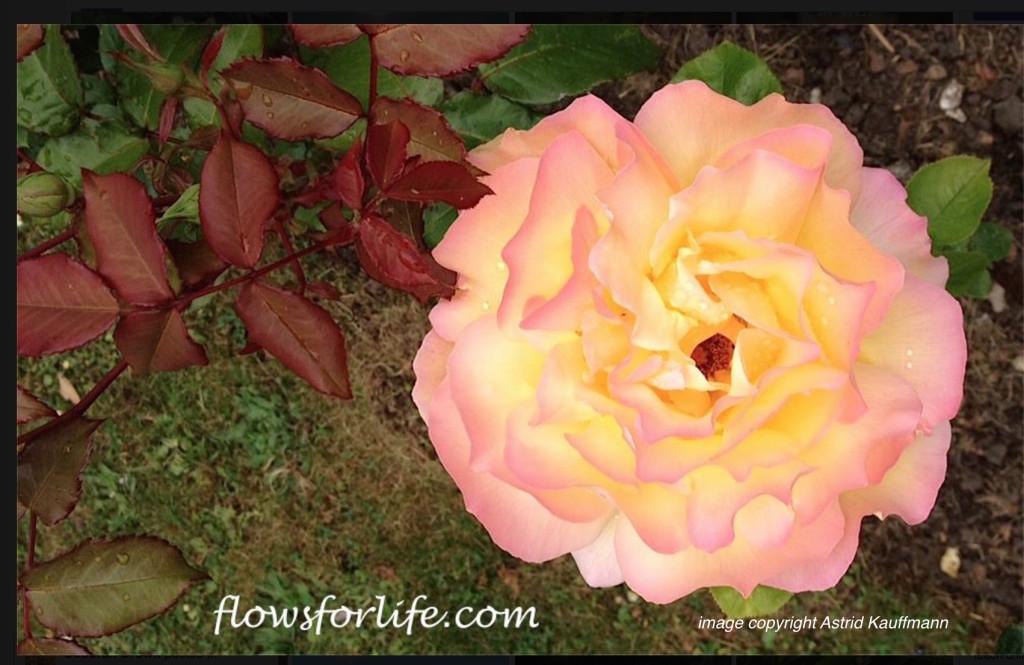 FFL JIN SHIN JYUTSU flower