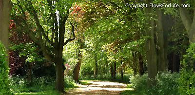 Flowsforlife Jin Shin Jyutsu Trees 400