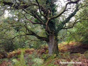 my-jin-shin-jyutsu-story-tree
