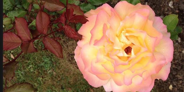 Jin Shi Jyutsu Flower